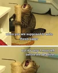 Дедлайн - мем с котиком